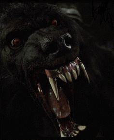 werewolf from van helsing Fantasy Creatures, Mythical Creatures, Van Helsing Werewolf, Dogman Encounters, Monster Hunt, Werewolf Art, Fear Of The Dark, Wolf Stuff, Big Bad Wolf