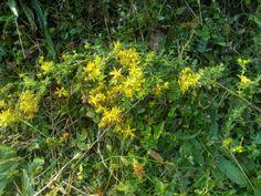 93 Ape Flora a Casa Aurora (Progetto APE °::° il 4.10.15 dalle 16:00 alle 16:30 °::°)