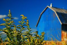 While on a color tangent.  Barns out of focus, but I think you can still see the effect of the blue.