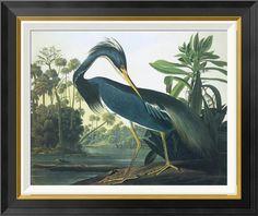 'Louisiana Heron' by John James Audubon Framed Wall Art