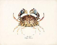 Vintage Box Crab Art Print Natural History by vintagebytheshore, $15.00