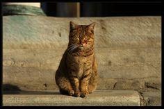Cat of Istanbul, outside Hagia Sophia | Flickr - Photo Sharing!