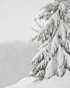Find images and videos about white, nature and winter on We Heart It - the app to get lost in what you love. I Love Snow, I Love Winter, Let It Snow, Winter White, Snow White, Winter Sport, Winter Schnee, Winter Magic, Winter's Tale