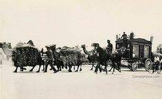 82 KB 1934 Hagenbeck Wallace Circus, Bactrian camels pulling circus wagon.  camelphotos.com