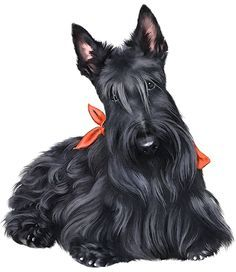 free scottish terrier clip art - Google Search