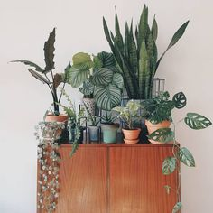 Plants in living room. Plants on a sideboard. - Interior - Plants in living room. Plants on a sideboard. – Interior Plants in living room. Plants on a sideboard. House Plants Decor, Plant Decor, Garden Plants, Indoor Plants, Hanging Plants, Cactus Decor, Hanging Baskets, Living Room With Plants, Uk Plant