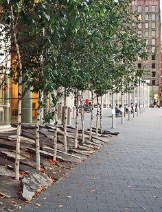 Coen central library birch trees in stone slabs Urban Furniture, Street Furniture, Urban Landscape, Landscape Design, Slate Garden, Gravel Garden, Public Space Design, Public Spaces, Garden Bed Layout