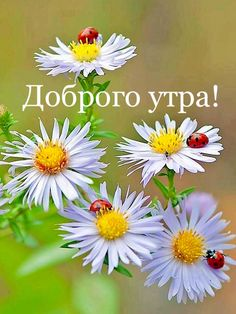 Утро Minion Jokes, Good Morning Greetings, Day Wishes, Disney Quotes, Beautiful Day, Congratulations, Diy And Crafts, Photo Wall, Romantic