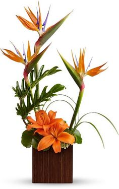estrelicia, tropical, laranjado e verde