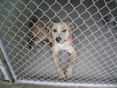 FLORIDA ~ URG'T ~ meet ID 1016833 an #adoptable Terrier in Brooksville. Dog #adoptions R 25 plus a 25 refundable sterilization deposit. PetLuv Spay & Neuter Clinic, offers the following & are  incl in the #adoption fee- spay/neuter, 1-yr rabies vacc, 4-in-1 vaccine, & gen'l deworming with Strongid-T. If you reside in Hernando Cnty, you'll also receive a free 1yr Hernando Cnty License. 19450 Oliver Street, Brooksville, FL 34601  P 352 796-5062  EMAIL: ac@co.hernando.fl.us - pinned 12.18