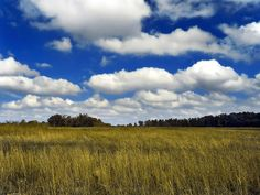 Small cumulus humilis clouds floating over a field