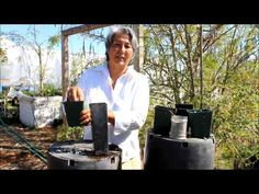 Fabulous How to plant a Moringa Seed u Best Growing Conditions for Moringa YouTube
