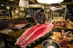 Tuna cutting at the Tsukiji fish market