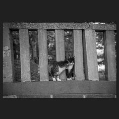Ruby and Chee April 2015 #cat #blackandwhitephotography