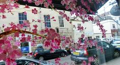 April in Paris Cherry Blossom Window Painting for a wedding shop window display in Bristol. Cheryl Holley is the artist window.mural@yahoo.co.uk