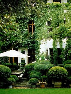Using lots of large pots with clipped shrubs of various heights is an interesting look. The climbing ivy forces the eye to look up and admire the architecture.