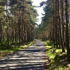 Ideal Cycling through the pine woods near Loch Garten in the Cairngorms National Park lochgarten