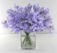 Lavender Sweetpeas