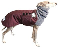 ITALIAN GREYHOUND Winter Coat by VoyagersK9Apparel on Etsy, $57.00