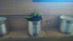 8ème jour de défi - une belle plante, ma plante carnivore #flow29jours