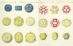 Partículas de polen como micro-reinos estéticos/