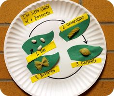 Life Cycle of A Butterfly Craft. Oh how stinkin' cute. Bean as eggs, twist noodle as caterpillar, bowtie pasta as butterfly, etc.
