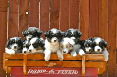 A breeder? What major thoughts are on your mind for your business?   #breeder #breeding #renspets #pets #puppies