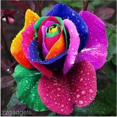 200 Pieces Cool Rainbow Rose Flower Seeds Garden Yard Rare Plants Flower Seeds #100BrandNew