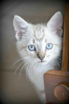 Brilliant - Beautiful Cats And Nature #repin