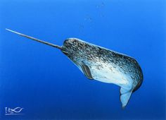 Google Image Result for http://mydisguises.com/wp-content/uploads/2012/05/narwhal.jpg