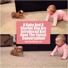 A Baby And A Shorkie Dog Are Introduced And Have The Cutest Conversation!