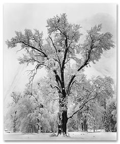 Ansel Adams another artist Joe and even I really like.  Black and white prints are awesome hanging on our family room walls, which are painted a cinnamon cherry.  Great contrast.