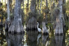Life, Attractions, Culture and Lincoln Vail Of the Everglades - Vacation in Florida