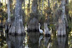 El Everglades en Miami es muy grande. Tiene mucho animals.