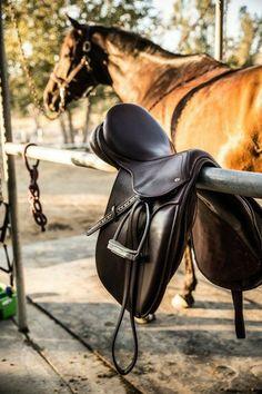 Equestrian Outfits, Equestrian Style, Equestrian Fashion, Equestrian Problems, Horse Fashion, English Riding, English Tack, English Saddle, Saddle Pads