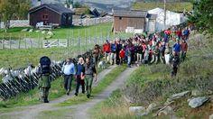 Sollia, Stor-Elvdal, Hedmark, NORWAY Pika Mountain Foto: Helle Therese Kongsrud