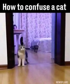 Cute Little Animals, Cute Funny Animals, Funny Cute, Cute Cats, Hilarious, Really Funny Memes, Funny Animal Memes, Funny Animal Pictures, Animal Jokes