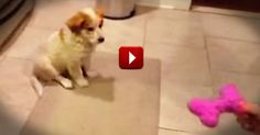 He Only 'Caught' It Once. I Got Caught Watching Him 6 Times. - Cute Video