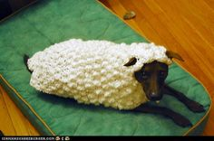 crocheted sheep coat for your dog. no pattern just picture.