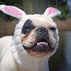 Just because it's already past Easter doesn't mean I can't dress up! #bunnyzoosnood . . #zoosnoods #dogstagram #lovedogs #instagramdogs #dogsofig #instadogs #dogsofinsta #dogslife #instadog #sillydog #dogfashion #dogfashionista #dogsnood #dogcosplay #doghat #dogsinhats #dogcostume #dogsinclothes #fashiondog #dogapparel #dogclothes #doggifts : @benzo_blanco