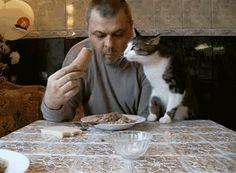 Tu doch die Katze vom Tisch, problem gelöst.. | Lustige Bilder, Sprüche, Witze, echt lustig