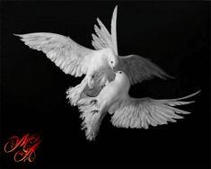 Carezze di seta • Simbolo della Pace e Amore puro …
