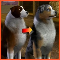 Australian Shepherd Improved by LittleV - The Exchange - Community - The Sims 3 The Sims 3 Pets, Sims Pets, Sims 3 Mods, Sims Cc, Pet Dogs, Dog Cat, Horse Mane, Blue Merle, Maxis