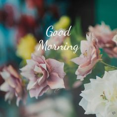 Good morning quote on photo with amazing flowers. Motivational Good Morning Quotes, Morning Quotes Images, Morning Greetings Quotes, Good Morning Messages, Morning Pictures, Good Morning Wishes, Good Morning Images Flowers, Good Morning Picture, Good Morning Good Night