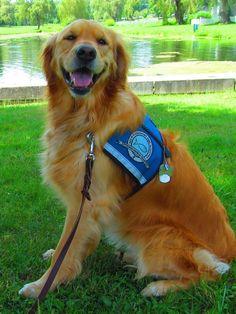 Maggie Comfort Dog loves to smile! #k9comfortdogs #dogs #dog #smile