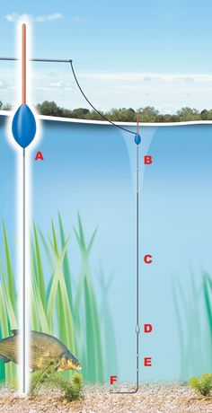This simple pole rig is perfect for fishing with chopped worm for a number  of reasons - it's stable so the bait remains still, it pushes the bait to  the bottom quickly to avoid smaller bait-snatching fish, and it is perfect  for lifting and lowering the bait to entice a bait.  A A rounded or