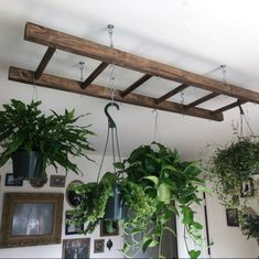Walnut Stained Pot Rack Ladder 4 or 5 ft Plant and Basket Holder, Pot and Pan hanger storage. Room With Plants, House Plants Decor, Plant Decor, Kitchen With Plants, Plant Rooms, Plant Ladder, Hanging Ladder, Ladder Hanger, Ladder Decor