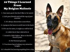 10 Things I Learned from my Belgian Malinois