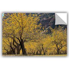 "ArtWall Scott Campbell Slide Rock Fall Apple Trees 1 Wall Mural Size: 16"" H x 24"" W x 0.1"" D"