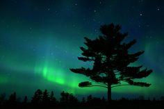 White Pine Aurora